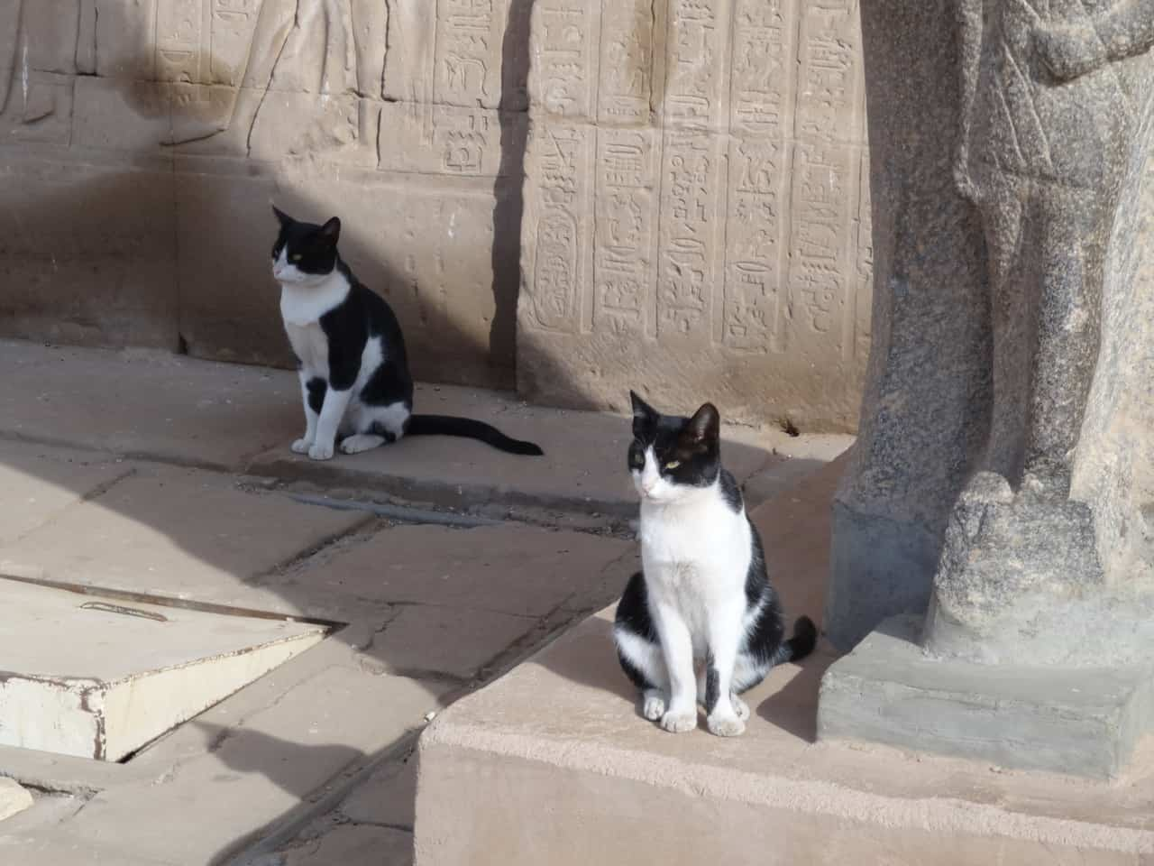 antik-misirli-smokin-kedi