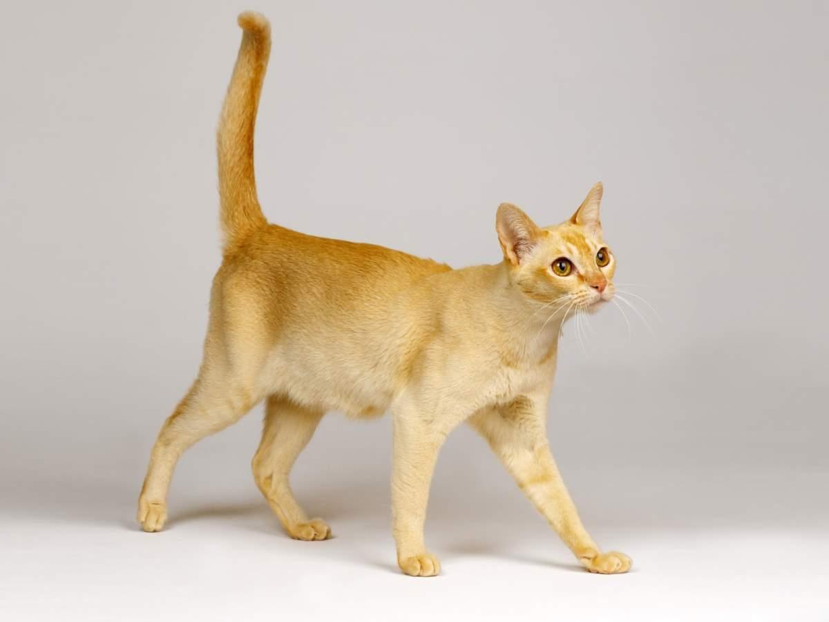 ideal-kilo-kedi-1.jpg