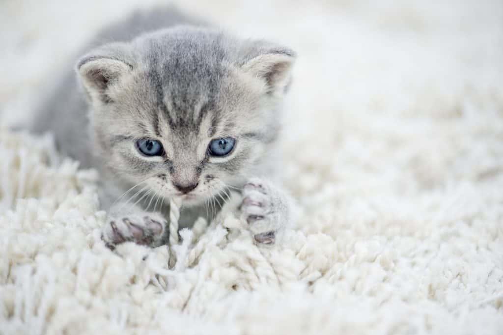 kedi-masaji-bebeklikten-gelen-bir-ic-gududur