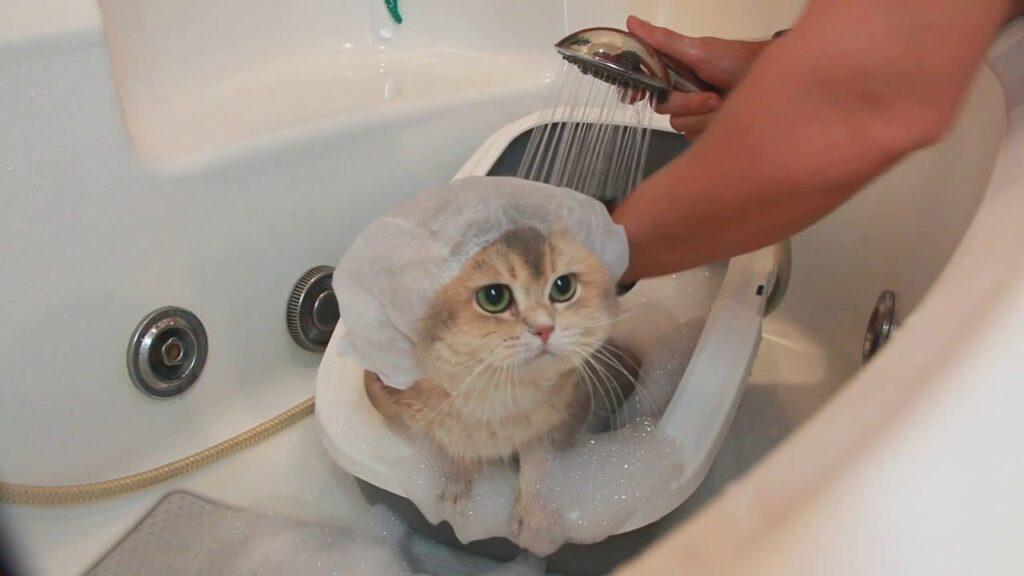 Kedi Neyle Yıkanır?