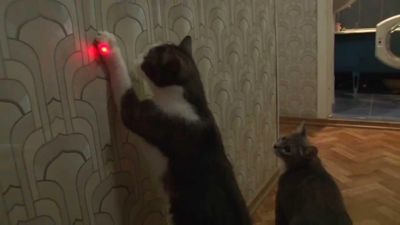 lazeri-tutamayan-kedi-1.jpg