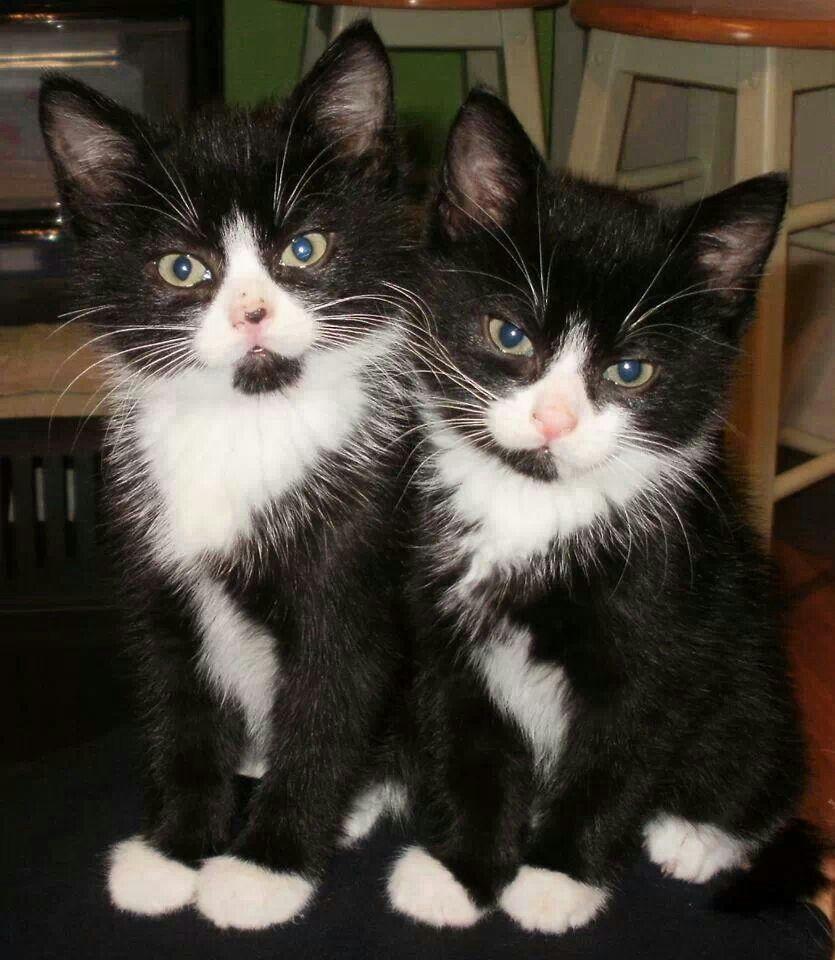 smokin-kedi-yavrulari