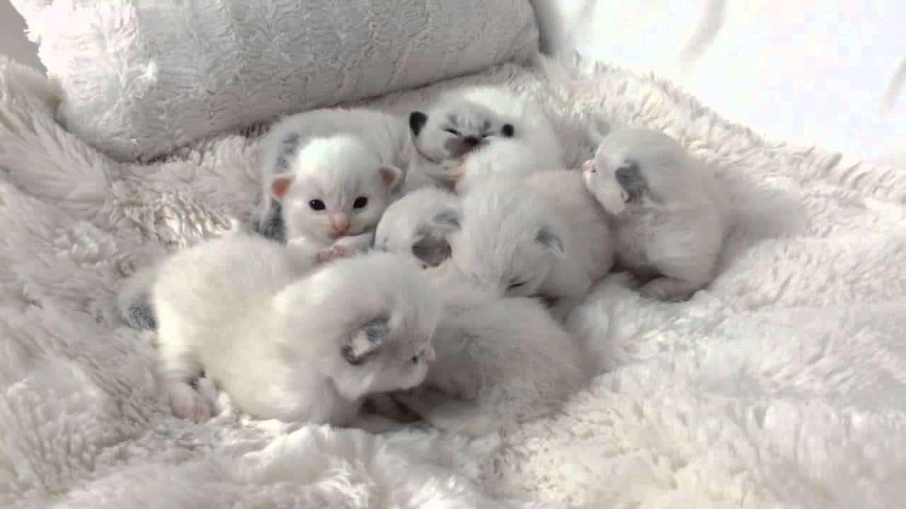 2 Haftalık Yavru Kedi Nasıl Beslenir
