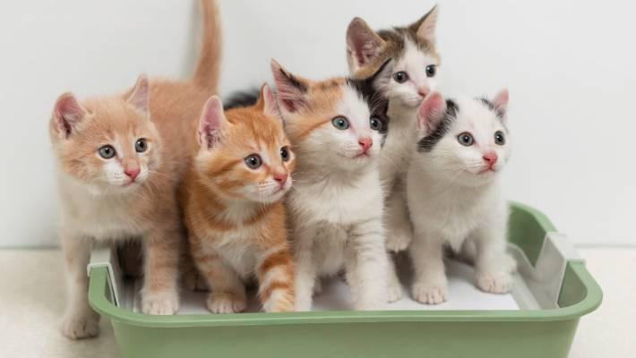Yavru Kedilerin Gözleri Ne Zaman Görmeye Başlar?