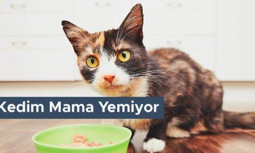 Kedim Mama Yemiyor Ne Yapmalıyım?
