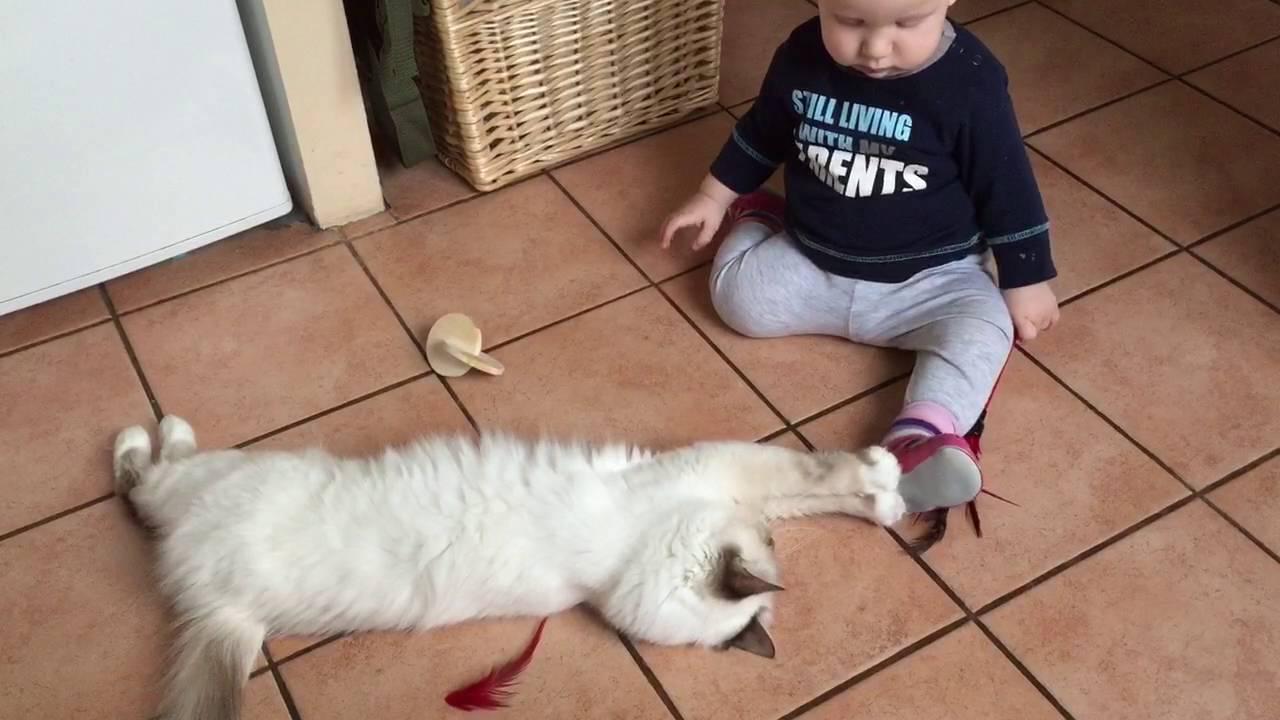 Birman Kedisi Çocuklarla Anlaşabilir
