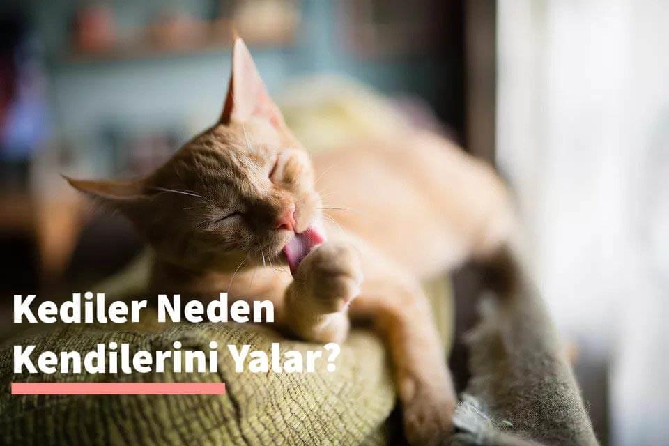 Kediler Neden Kendini Yalar?