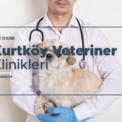 Kurtköy Veteriner Klinikleri