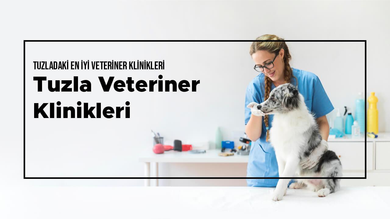 Tuzla Veteriner Klinikleri