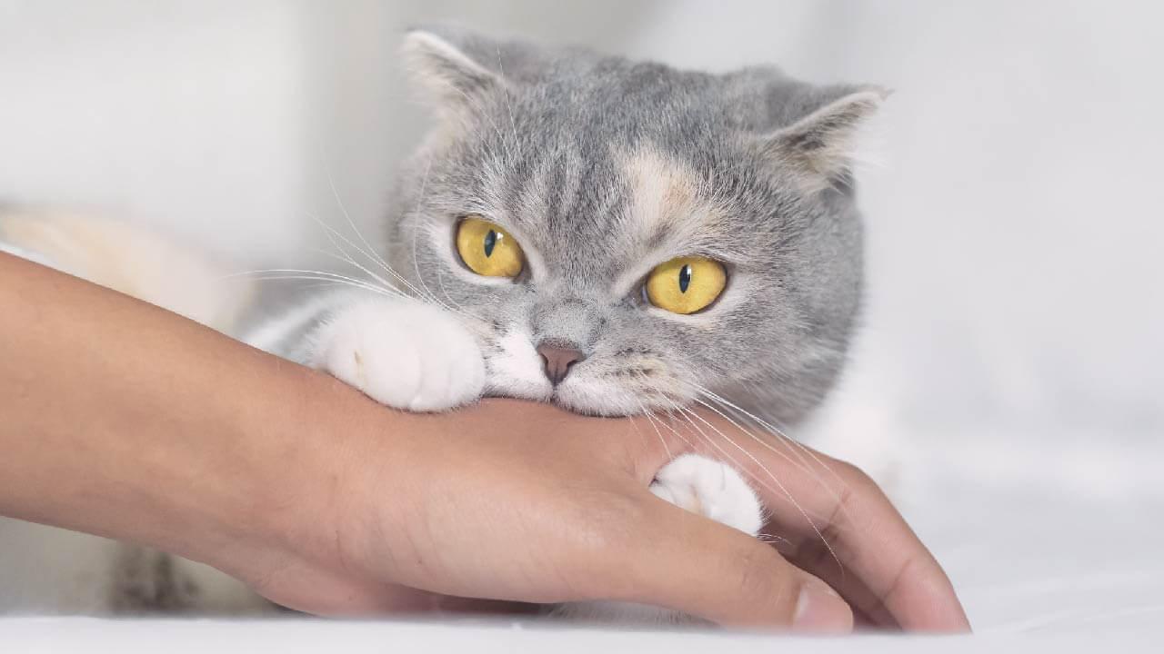 Kedi Niye Isırır?