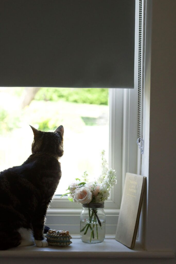 Kediler İçin Stor Perde