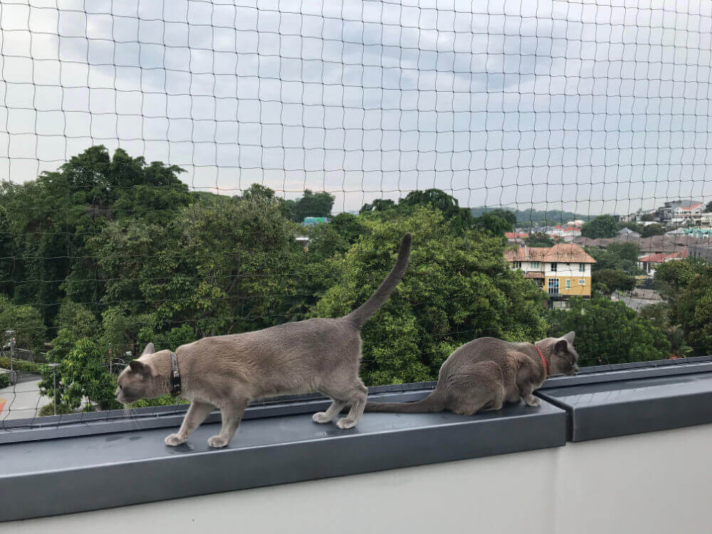Kediler Balkonda Üşür Mü?