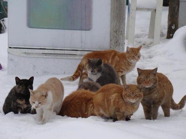 Kediler Kaç Derecede Üşür?