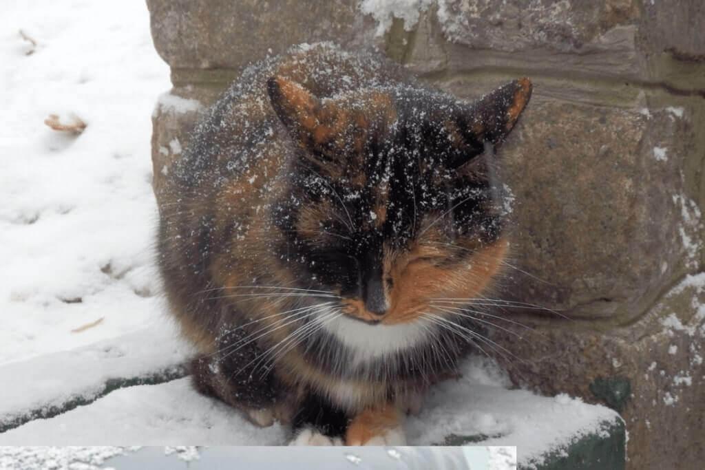 Kediler Soğukta Üşür Mü?