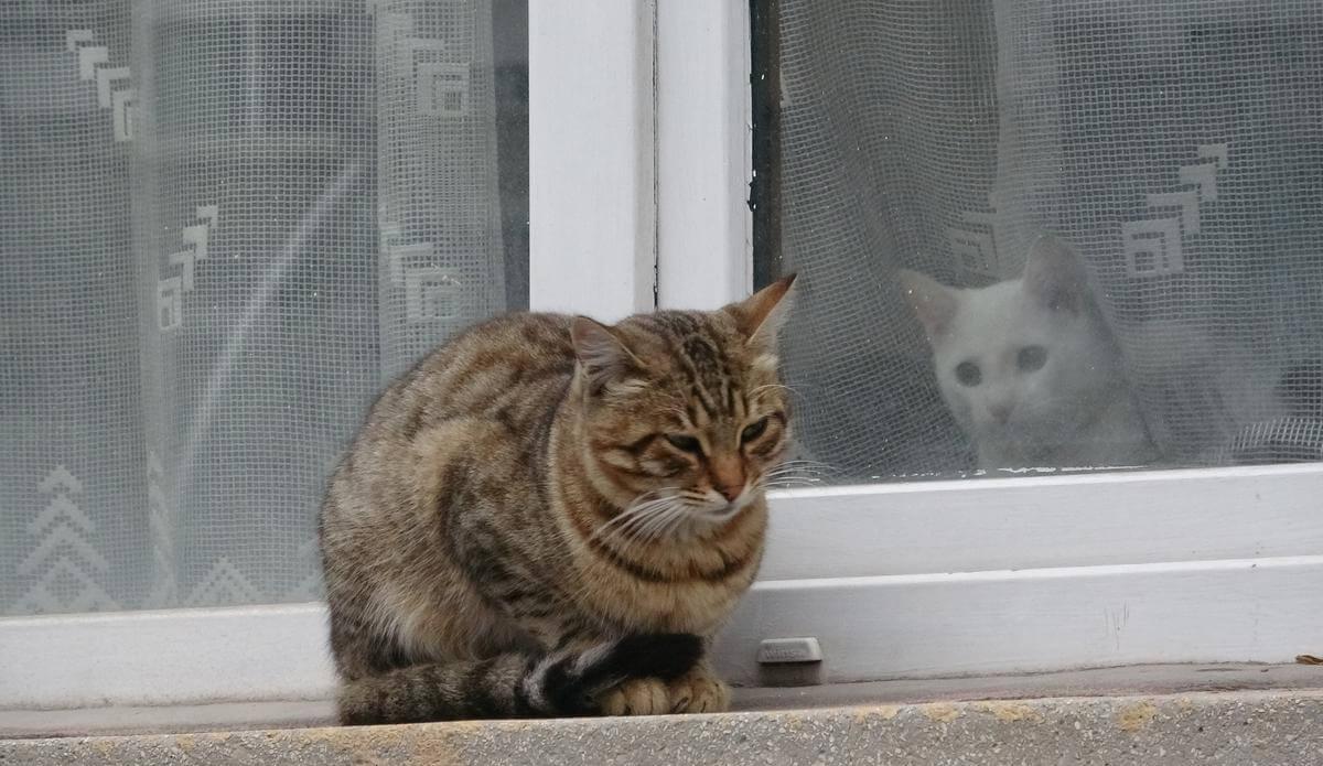 Kediler Üşür Mü?