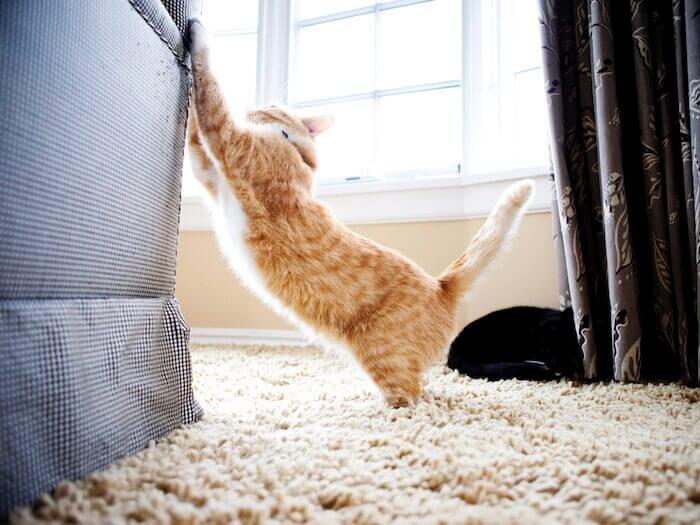 Kedileri Koltuklardan Uzak Tutmak İçin Yapılacaklar