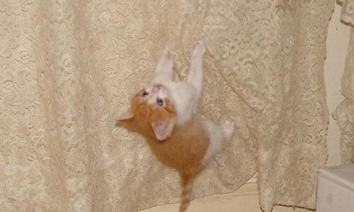 Kedileri Perdelerden Uzak Tutmak İçin 6 Yöntem