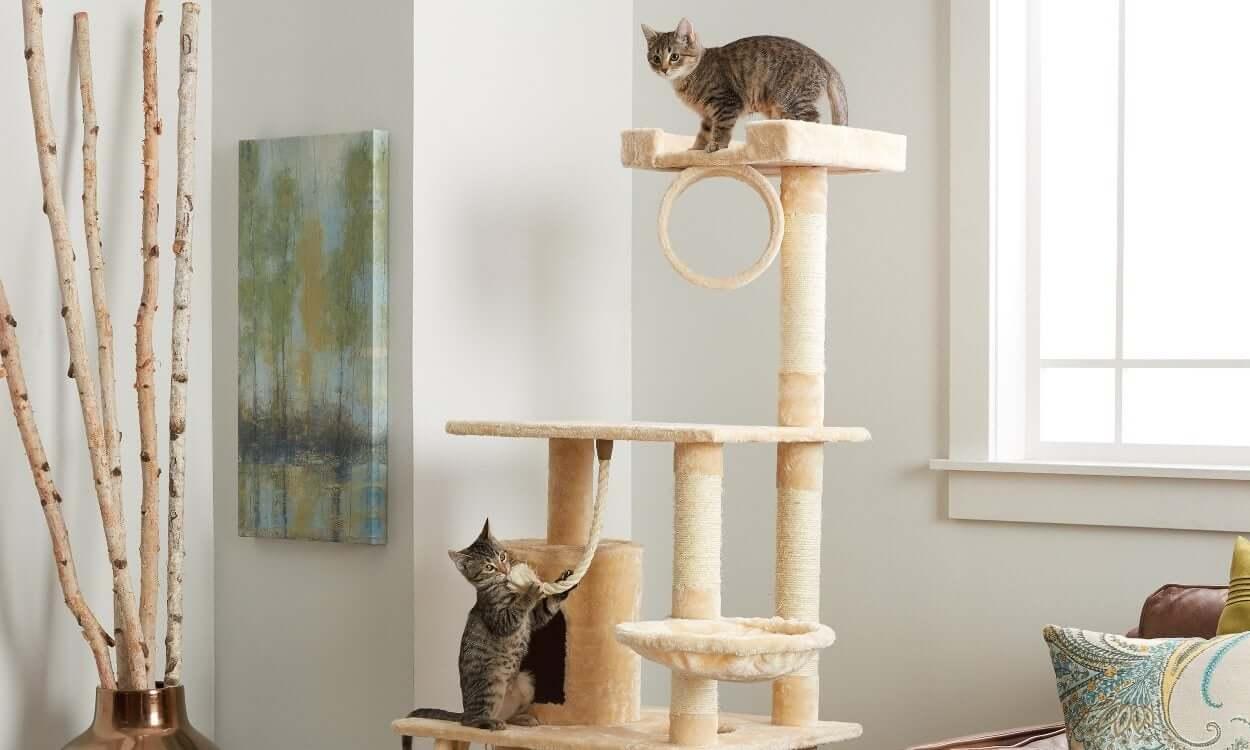 Kedileri Perdelerden Uzak Tutmak İçin Kedi Ağacı Kullanılmalı