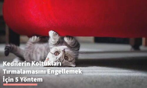 Kedilerin Koltukları Tırmalamasını Engellemek İçin 5 Yöntem