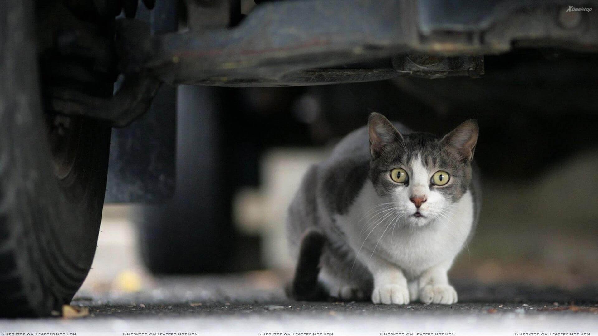 Kedilerin Üşüdüğünü Nasıl Anlarız?
