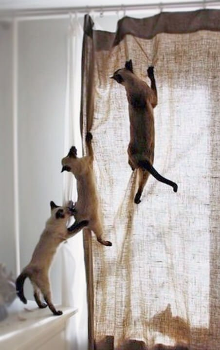Kedim Perdelere Tırmanıyor Ne Yapmalıyım?