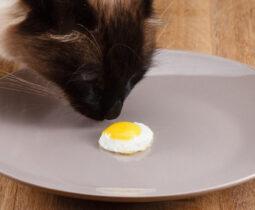 Kediler Yumurta Yer Mi?