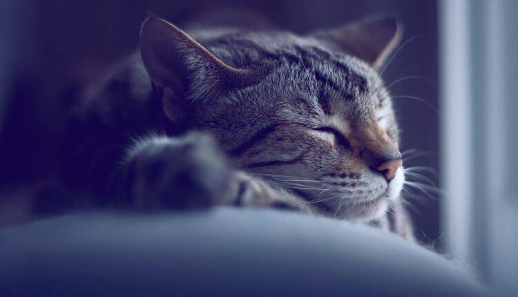 Kediler Gece Nasıl Uyur