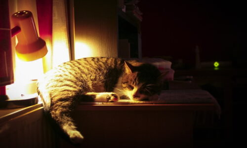 Kediler Gece Nasıl Uyutulur?