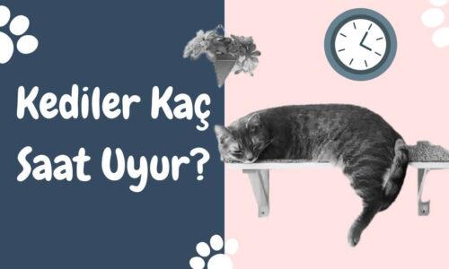 Kediler Kaç Saat Uyur?