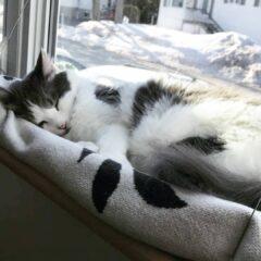 Kediler Neden Çok Uyur?