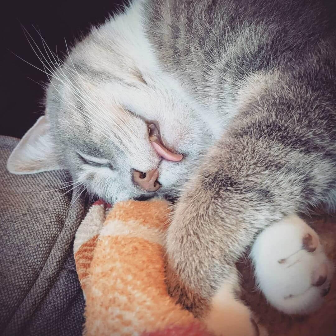 Kediler Neden Dili Dışarda Uyur?