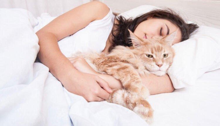 Kediler Neden Sahiplerinin Yanında Uyur?