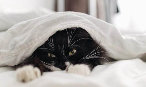 Kediler Nerde Uyur?
