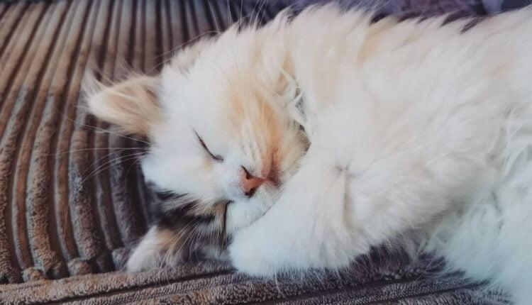 Yavru Kediler Neden Çok Uyur?
