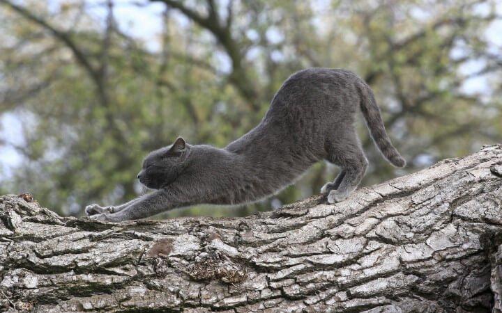 Kediler Neden Esneme Hareketi Yapar?
