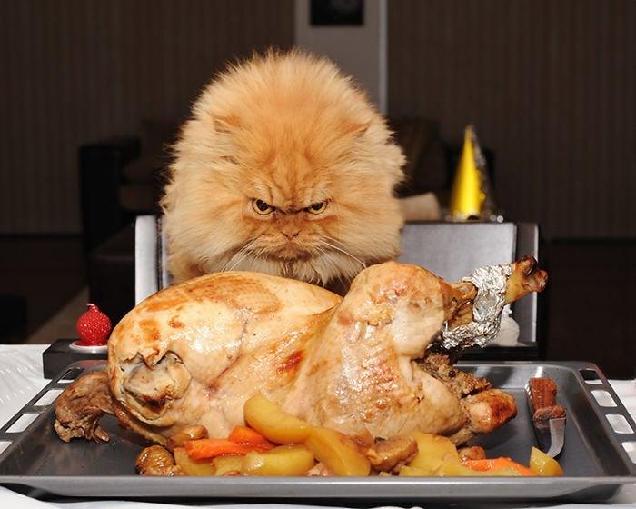 Kediler Tavuk Yer Mi?