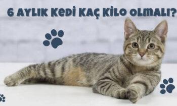 6 Aylık Kediler Kaç Kilo Olmalı?