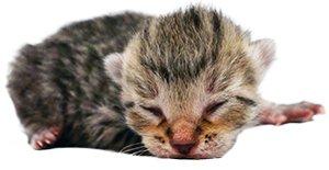 Yeni Doğmuş Kedi